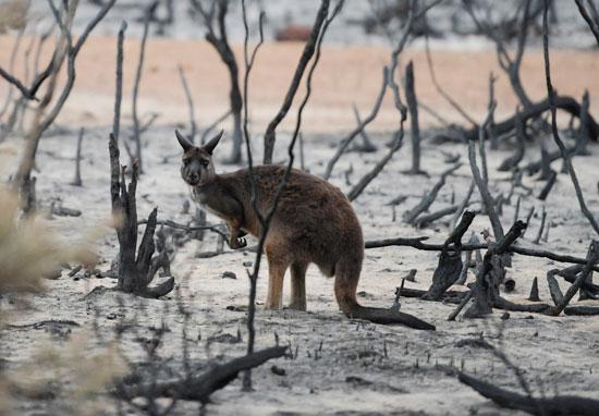 حيوان يقف وسط بقايا الاشجار