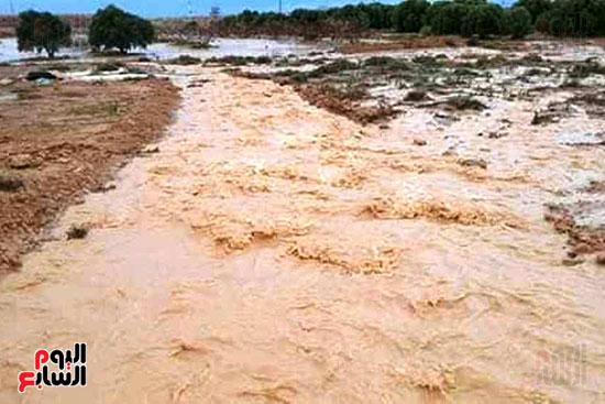 أمطار-الخير-تروي-الزراعات-بالوديان-وتملأ-خزانات-السدود-والآبار-بصحراء-مطروح-(2)