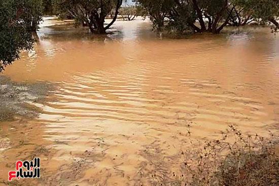 أمطار-الخير-تروي-الزراعات-بالوديان-وتملأ-خزانات-السدود-والآبار-بصحراء-مطروح-(8)