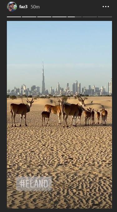 ولى عهد دبى يشارك متابعيه مشاهد الحيوانات البرية والصحراء الخلابة