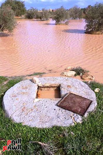 أمطار-الخير-تروي-الزراعات-بالوديان-وتملأ-خزانات-السدود-والآبار-بصحراء-مطروح-(6)