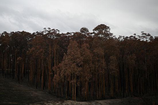 غابات-أستراليا