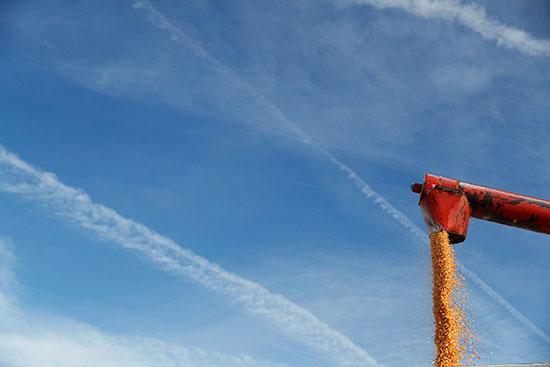 تحميل محصول الذرة فى أيوا