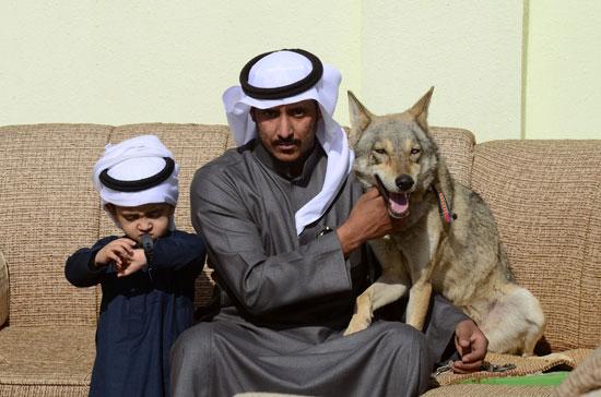 رامى-مع-الذئب
