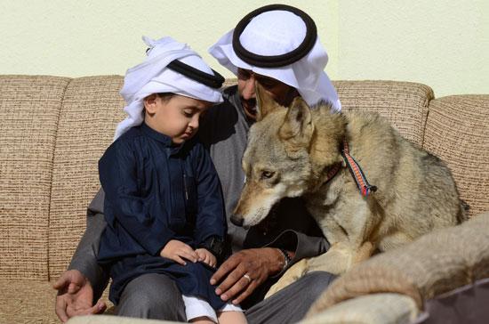 ابن-رامى-السرحانى