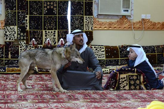 الذئب-مع-الأسرة
