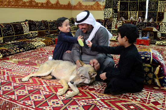 ذئب-يلعب-مع-الأطفال