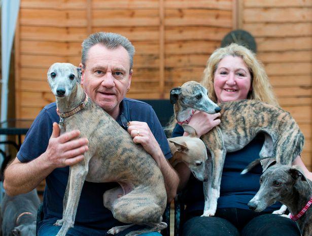 زوجان يربيان الكلاب فى المنزل