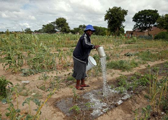 مزارعو زيمبابوى اتجهوا لاسترضاء المستثمرين على حساب الغذاء