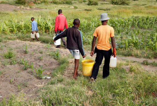 جانب من المزارعين فى زيمبابوى