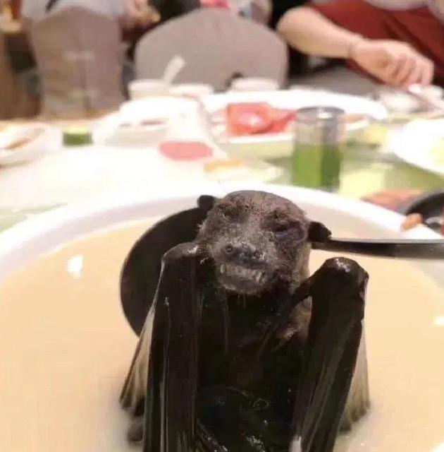 حساء الخفافيش