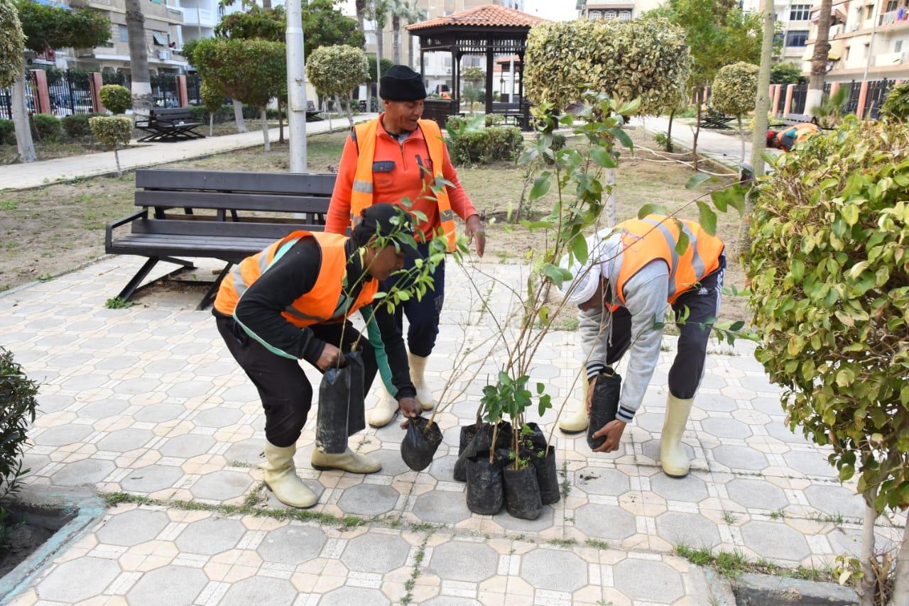زراعة أشجار مثمرة ضمن مبادرة اتحضر للأخضر ببورسعيد (2)