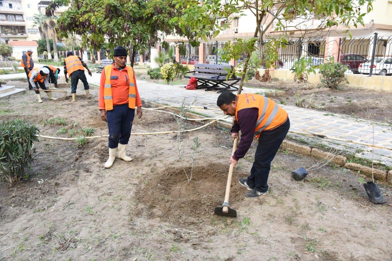 زراعة أشجار مثمرة ضمن مبادرة اتحضر للأخضر ببورسعيد (7)