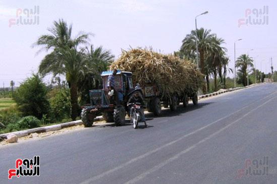 18-شحنات-القصب-لدي-وصولها-إلي-مصنع-سكر-أرمنت