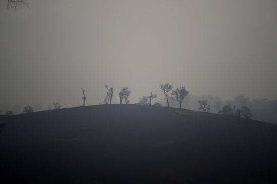 أراضى زراعية متفحمة جراء حرائق الغابات