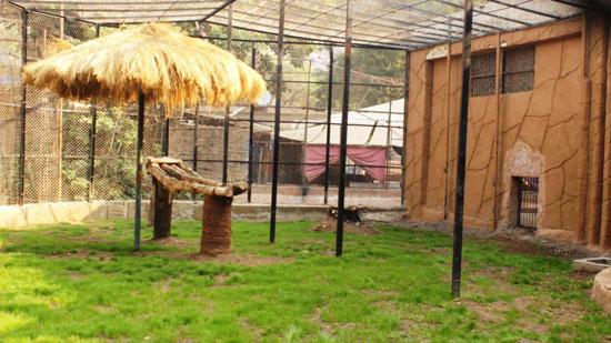120206162647806-_مكان-العرض-المفتوح-للنمور-بحديقة-حيوان-الجيزة-(4)