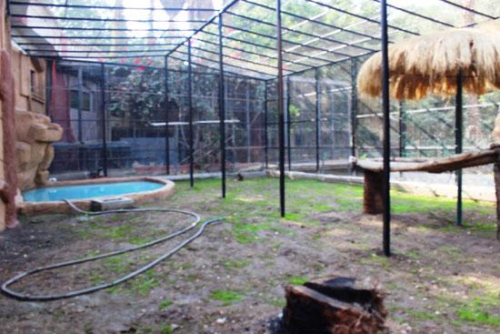 120206162647806-_مكان-العرض-المفتوح-للنمور-بحديقة-حيوان-الجيزة-(5)