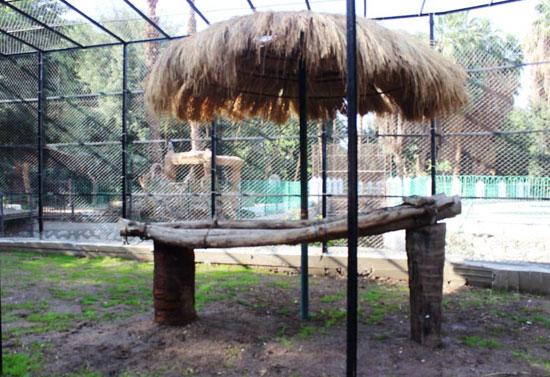 120206162647790-_مكان-العرض-المفتوح-للنمور-بحديقة-حيوان-الجيزة-(1)