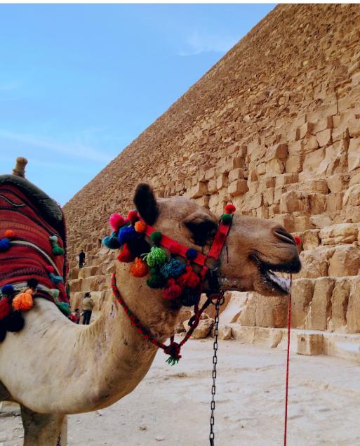 هاشتاج GoEgypt يتصدر تويتر  (3)