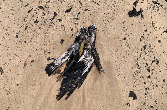 تصاعد نفوق الطيور بسبب حرائق استراليا