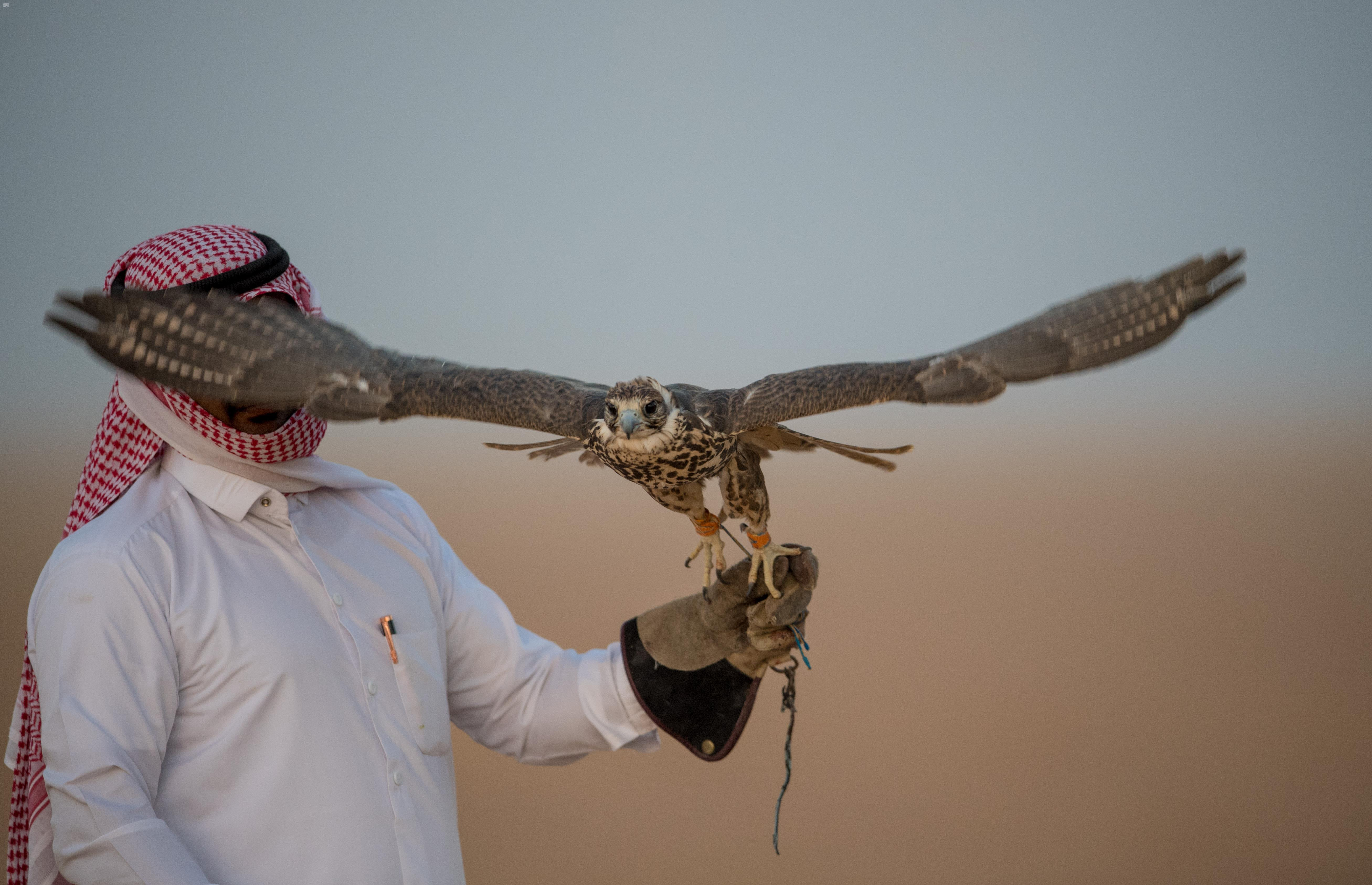 احد الصقارين السعوديين