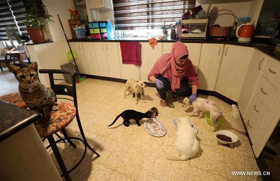 مها ترعى الحيوانات الضالة في مدينة رام الله بالضفة الغربية