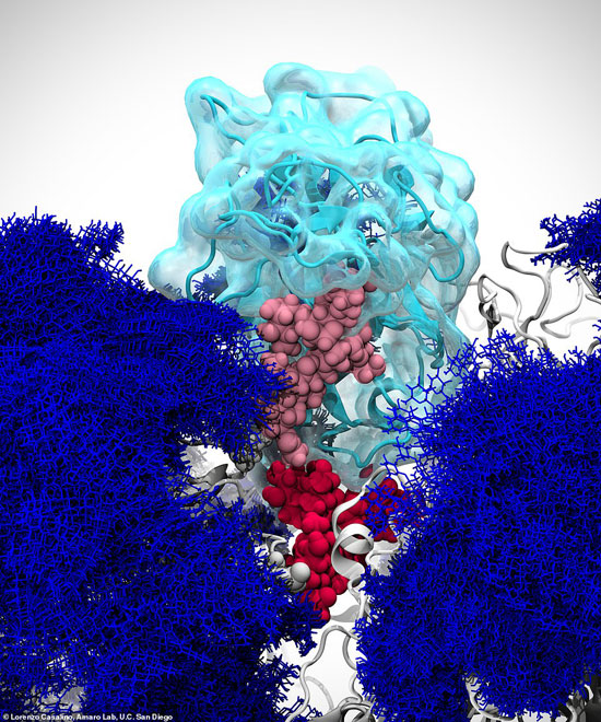 يرجح العلماء أن الصور الجديدة ستمكنهم من السيطرة على الفيروس