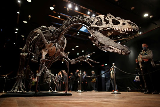 ديناصور من نوع الألوصور