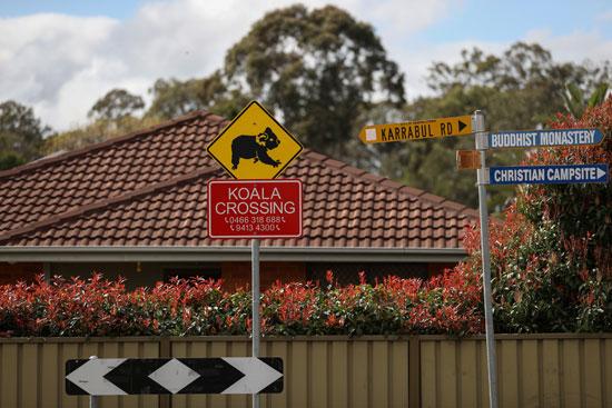 2020-10-19T040123Z_1318464757_RC2GLJ9M0WPP_RTRMADP_3_AUSTRALIA-KOALAS-NSW