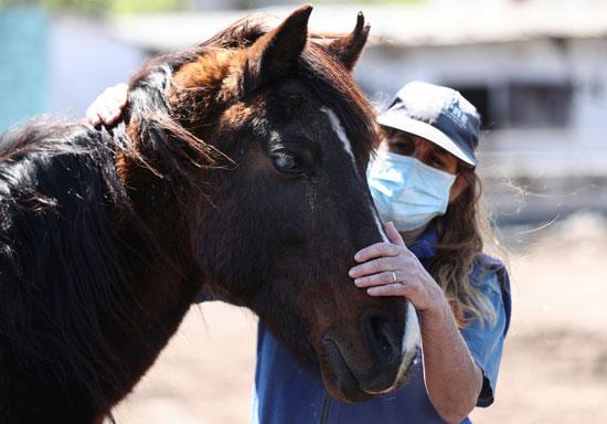 نورا-بيريز-،-رئيس-APRE-(جمعية-حماية-الإنقاذ-للخيول)
