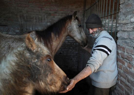 إطعام الحصان أندروميدا