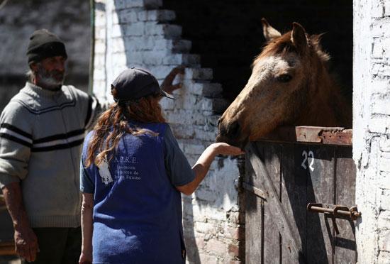 رئيس-جمعية-حماية-الإنقاذ-للخيول-ومقدم-الرعاية-والتر-كاربوني-يطعمان--الحصان-أندروميدا