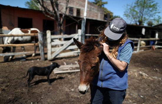 نورا-بيريز-تقبل-حصانًا-تعرض-لسوء-المعاملة