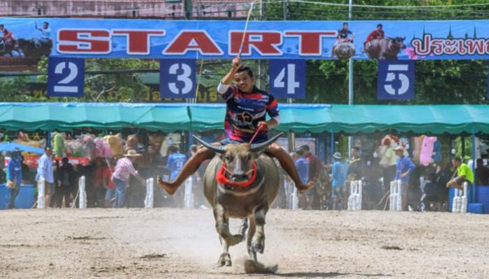154-224231-thailand-buffalos-corona-race-restrictions_700x400
