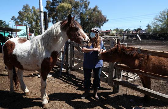 الاهتمام-بالخيول-التى-تم-إنقاذها