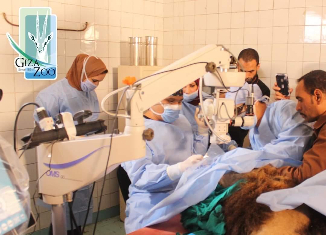 غرفة عمليات مجهزة لاجراء عملية الاسد هوجان (1)