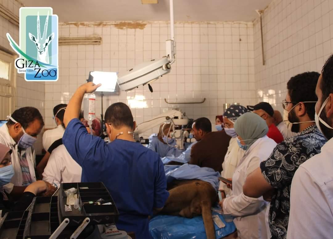 غرفة عمليات مجهزة لاجراء عملية الاسد هوجان (3)