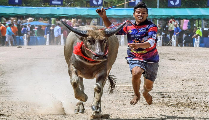 154-224232-thailand-buffalos-corona-race-restrictions-3