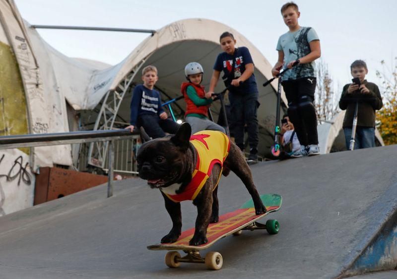 الأطفال يتابعون الكلب وهو يتزلج