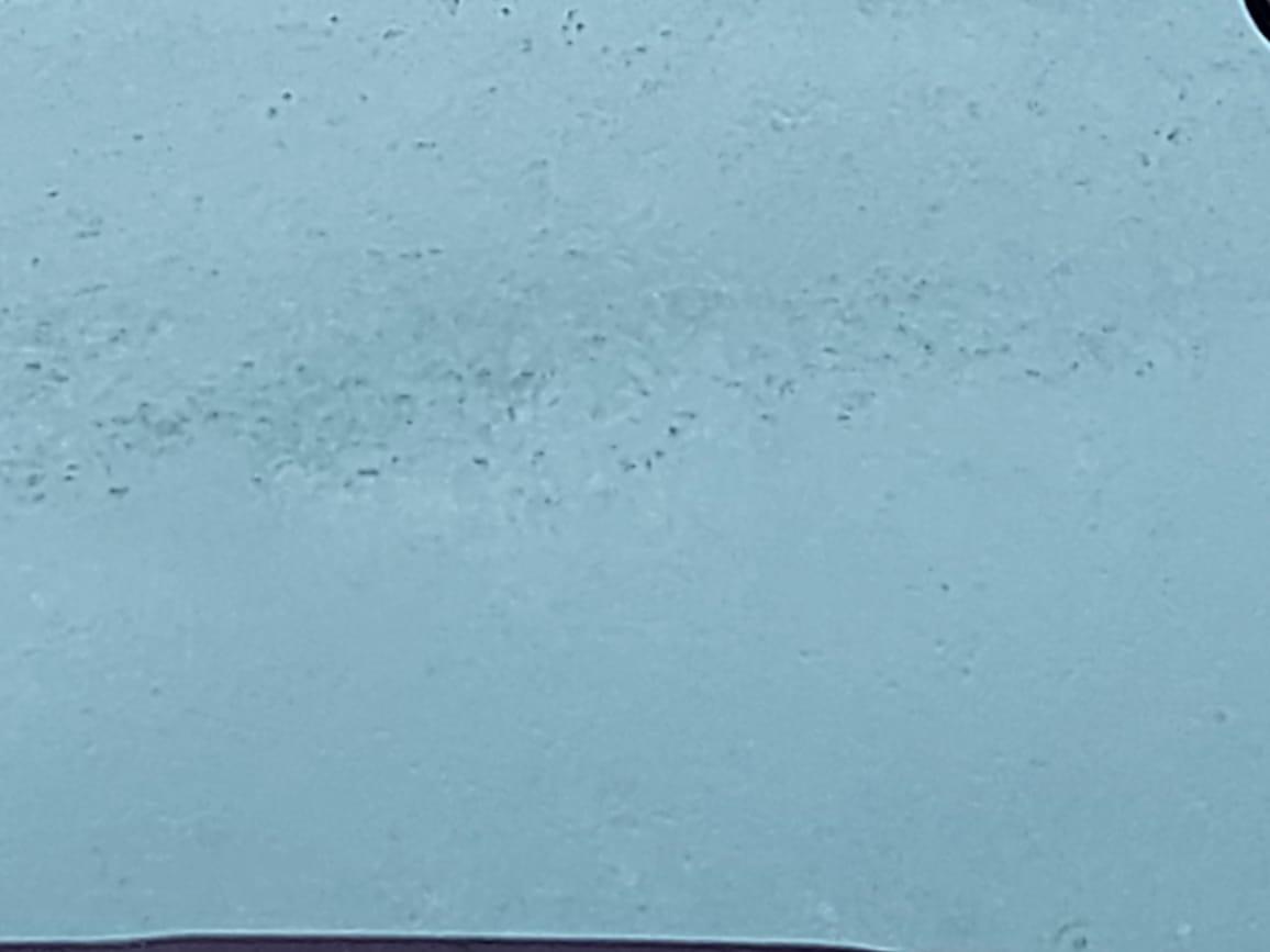 هطول أمطار غزيرة (11)