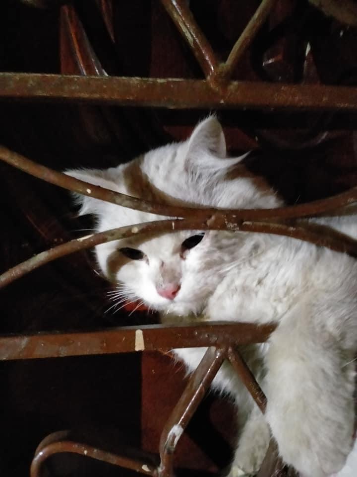 القطة قبل استخراجها