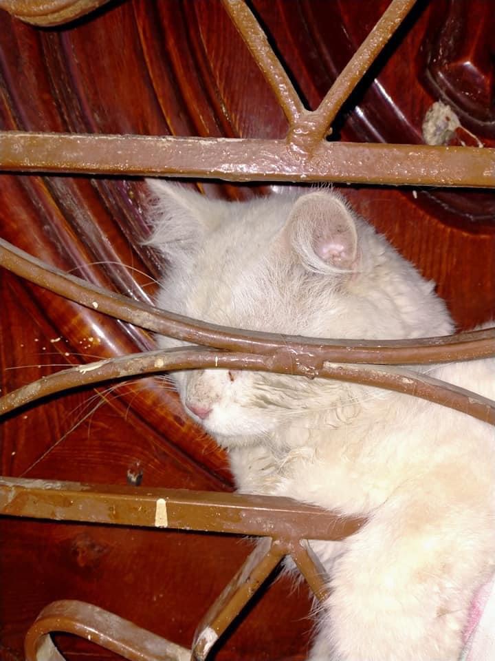 القطة محشورة بين البابين الخشبى والحديد