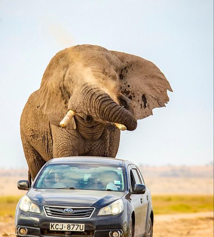 صور الفيل