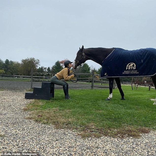 بيلا حديد تحصل على حصانها المفضل