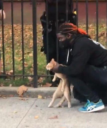 القطة بعد انقاذه