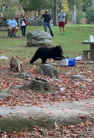 دب يسرق آيس بوكس لإحدى الأسر أثناء تواجدها في حديقة بأمريكا (2)