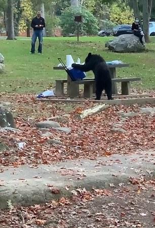 دب يسرق آيس بوكس لإحدى الأسر أثناء تواجدها في حديقة بأمريكا (1)