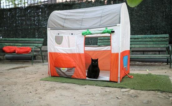 بيوت للقطط