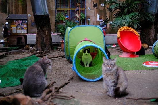 رعاية القطط
