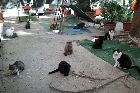 القطط داخل المحمية